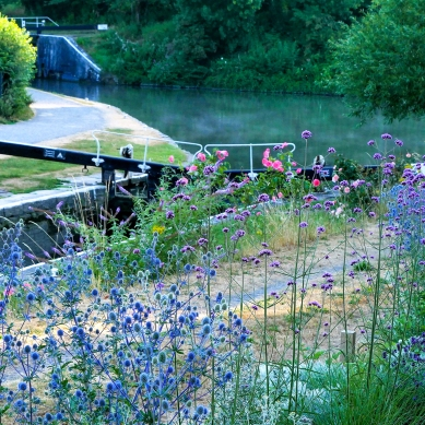 canal-flowers*